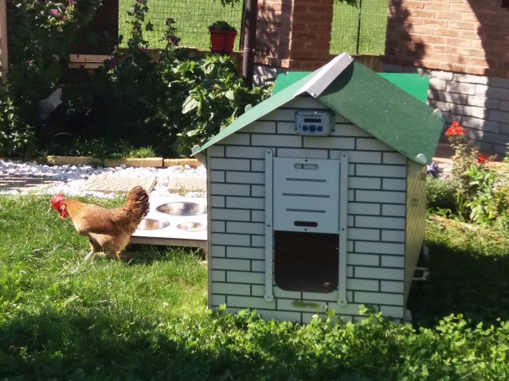 Cosa cercare in un pollaio domestico