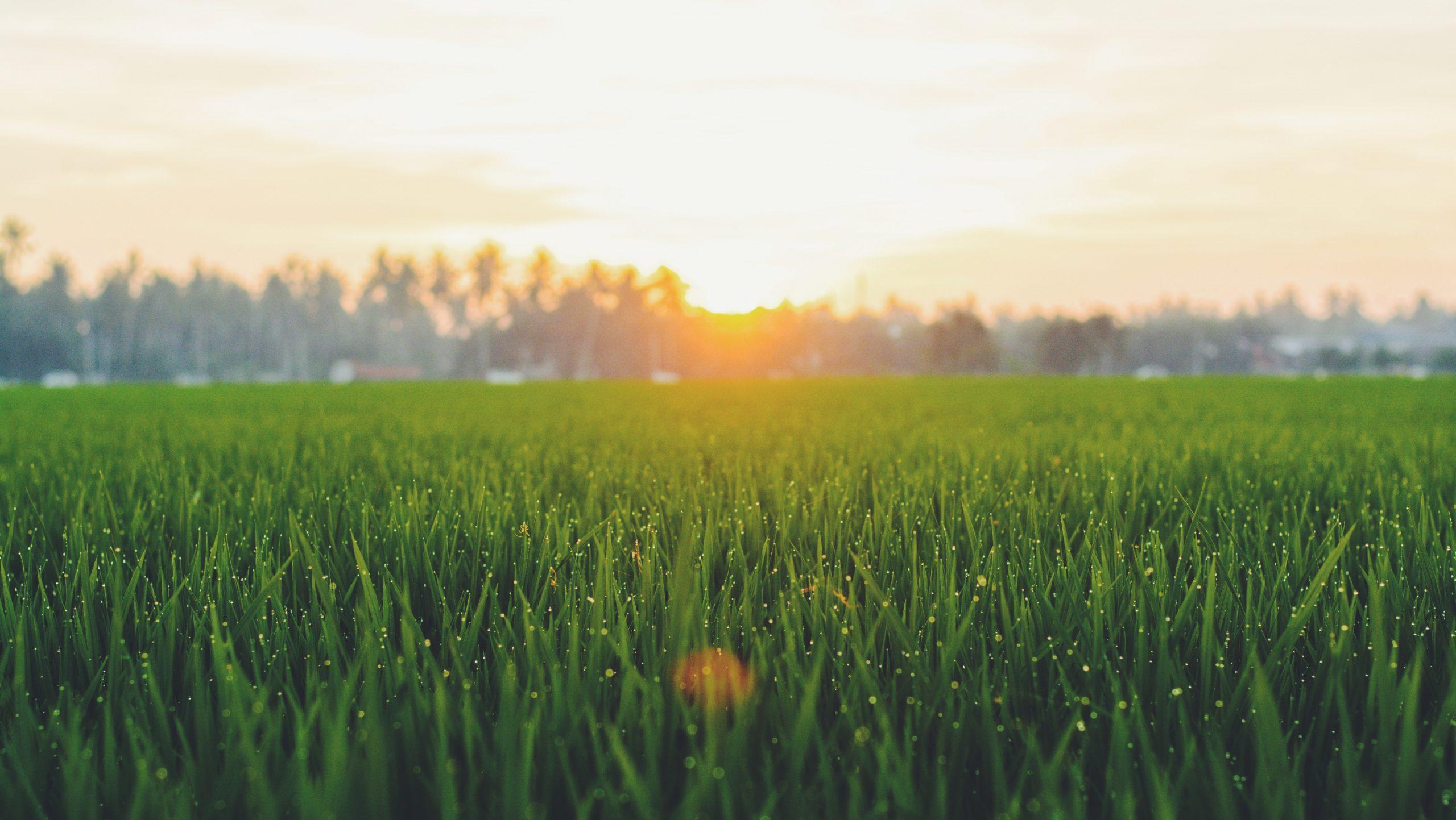 Le sementi giuste per un prato molto esposto al sole